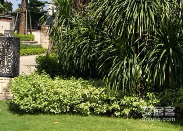 阳光城领海!泰式园林113平户型方正可做四房两卫!