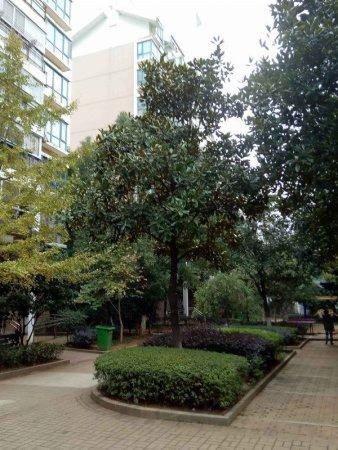 翠苑路地铁口精装小两房出门就是学校南师附小房东诚售