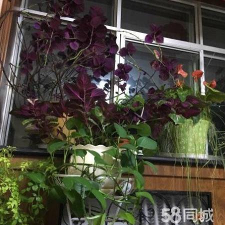 紫薇花园,4楼,简装,地理位置好,环境好